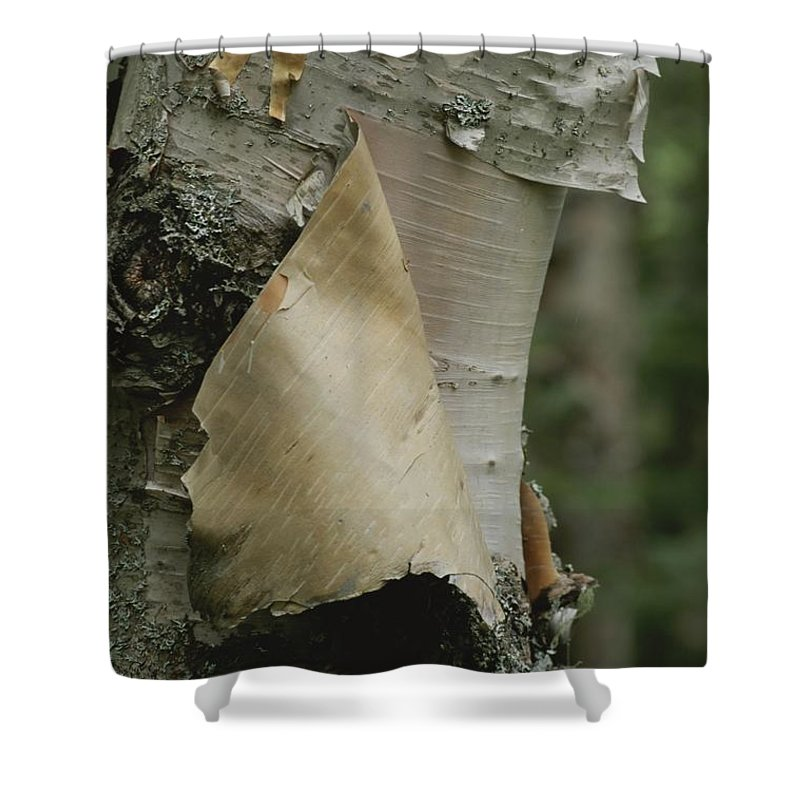Outdoors Shower Curtain featuring the photograph Close View Of Paper-birch Bark by Michael S. Lewis