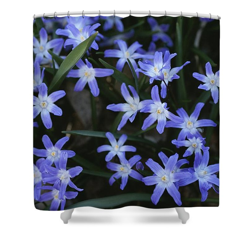 Plants Shower Curtain featuring the photograph Close View Of Spring Flowers by Darlyne A. Murawski