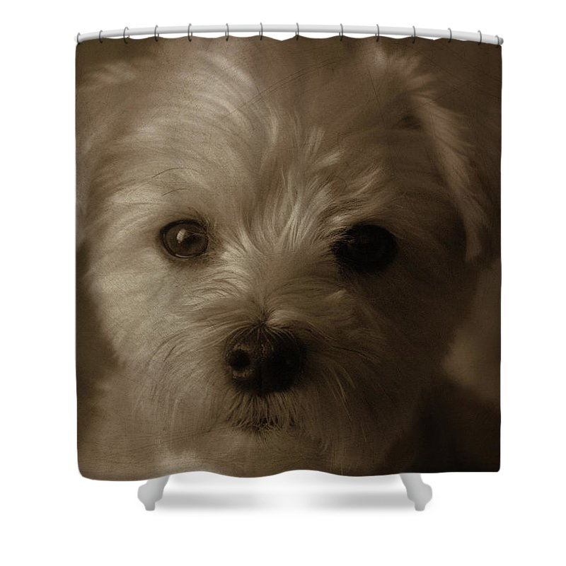 Closer To The Heart Shower Curtain featuring the photograph Closer To The Heart by Ed Smith