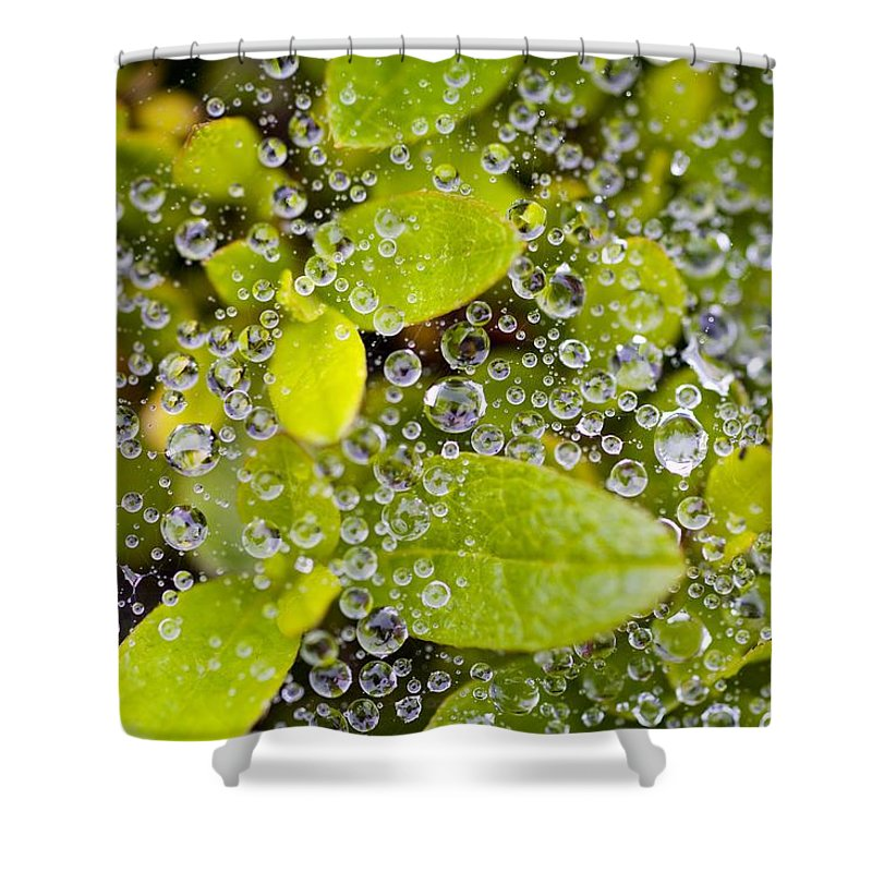 Close Up Shower Curtain featuring the photograph Closeup Of Morning Dew On Leaves by Craig Tuttle