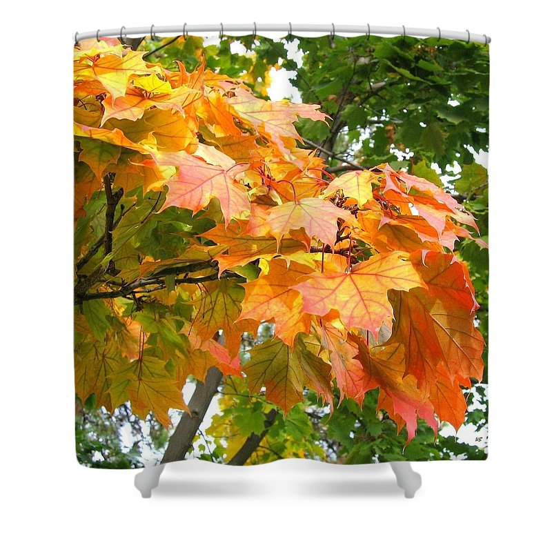 Cluster Of Color Shower Curtain featuring the photograph Cluster Of Color by Will Borden