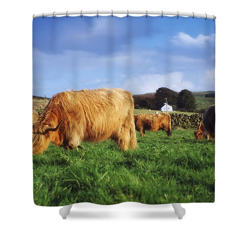 Animals Shower Curtain featuring the photograph Co Antrim, Ireland Highland Cattle by The Irish Image Collection