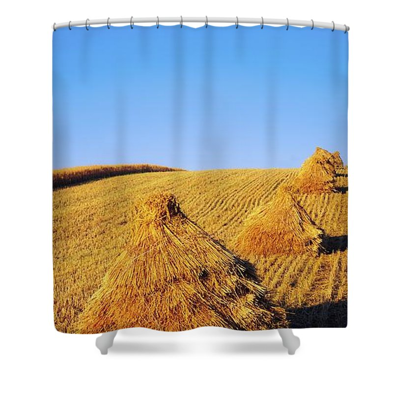 Beauty In Nature Shower Curtain featuring the photograph Co Down, Ireland Oats by The Irish Image Collection