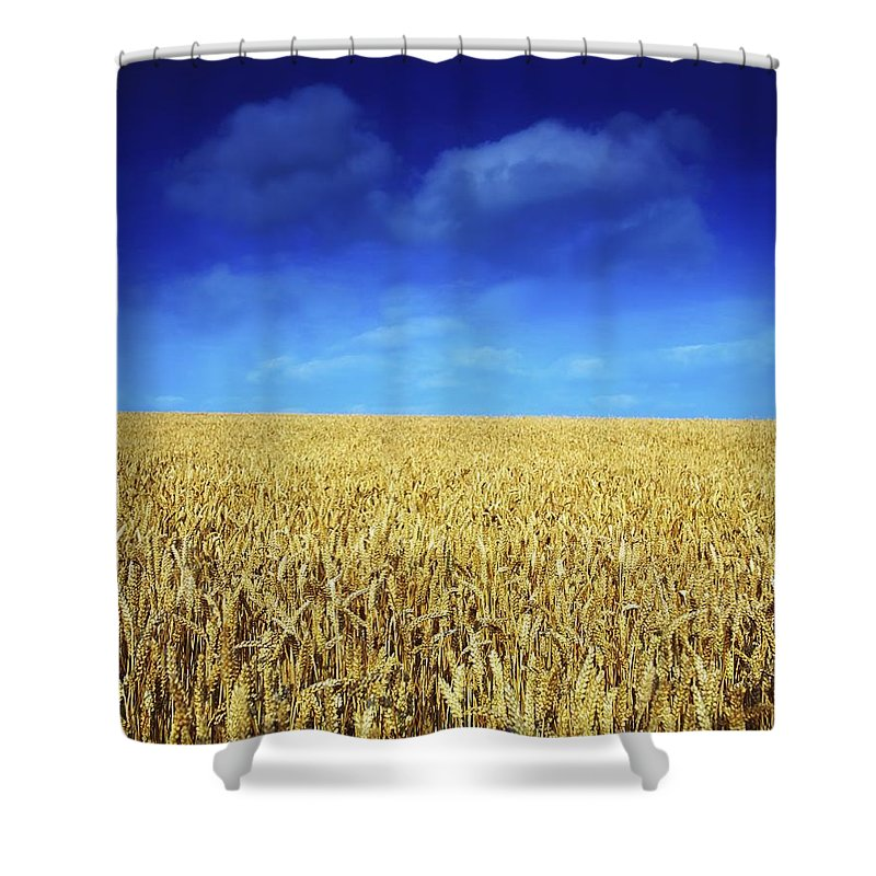 Autumn Shower Curtain featuring the photograph Co Louth,irelandwheat Field by The Irish Image Collection