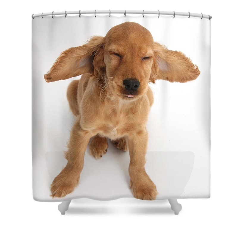 Nature Shower Curtain featuring the photograph Cocker Spaniel Puppy Making A Face by Mark Taylor