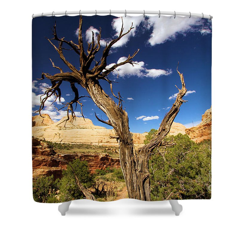 Capitol Reef Shower Curtain featuring the photograph Cohab Canyon At Capitol Reef by Adam Jewell
