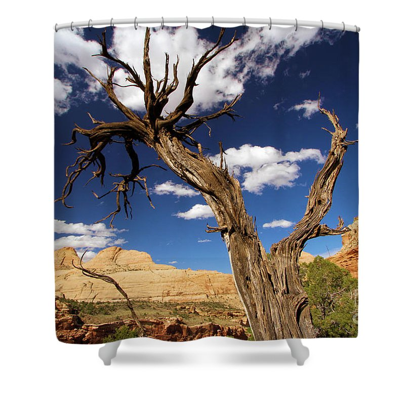 Capitol Reef National Park Shower Curtain featuring the photograph Cohab Canyon Overlook by Adam Jewell