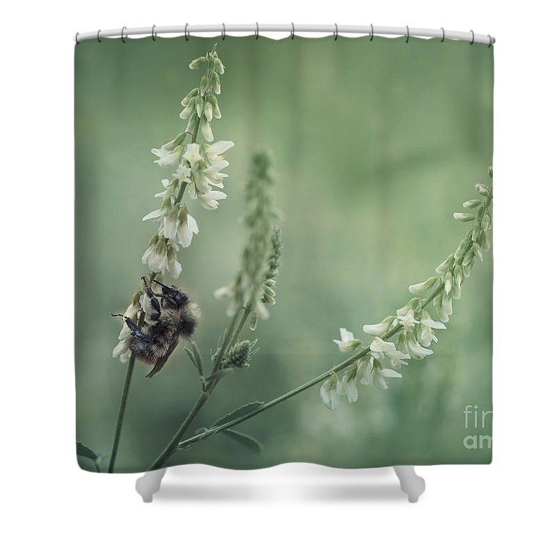 Sweet Clover Shower Curtain featuring the photograph Collecting The Summer by Priska Wettstein