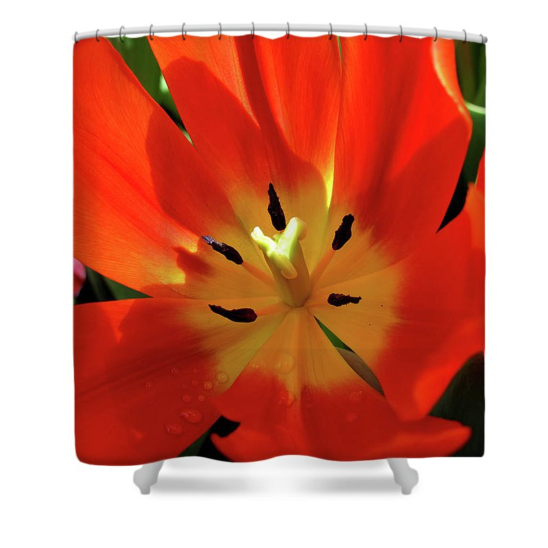 Tulip Shower Curtain featuring the photograph Color Wheel Of Light by Rachel Cohen
