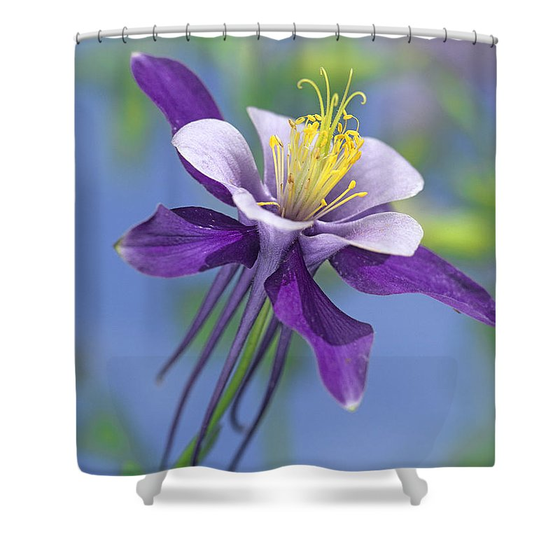 00176669 Shower Curtain featuring the photograph Colorado Blue Columbine Close by Tim Fitzharris