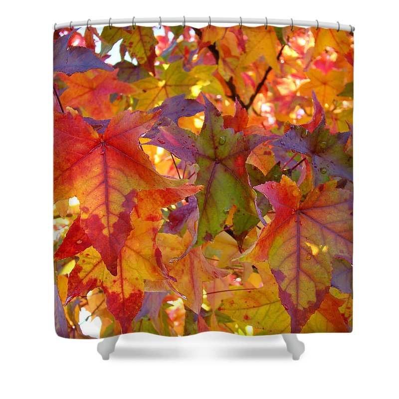 Autumn Shower Curtain featuring the photograph Colorful Autumn Leaves Art Prints Trees by Baslee Troutman