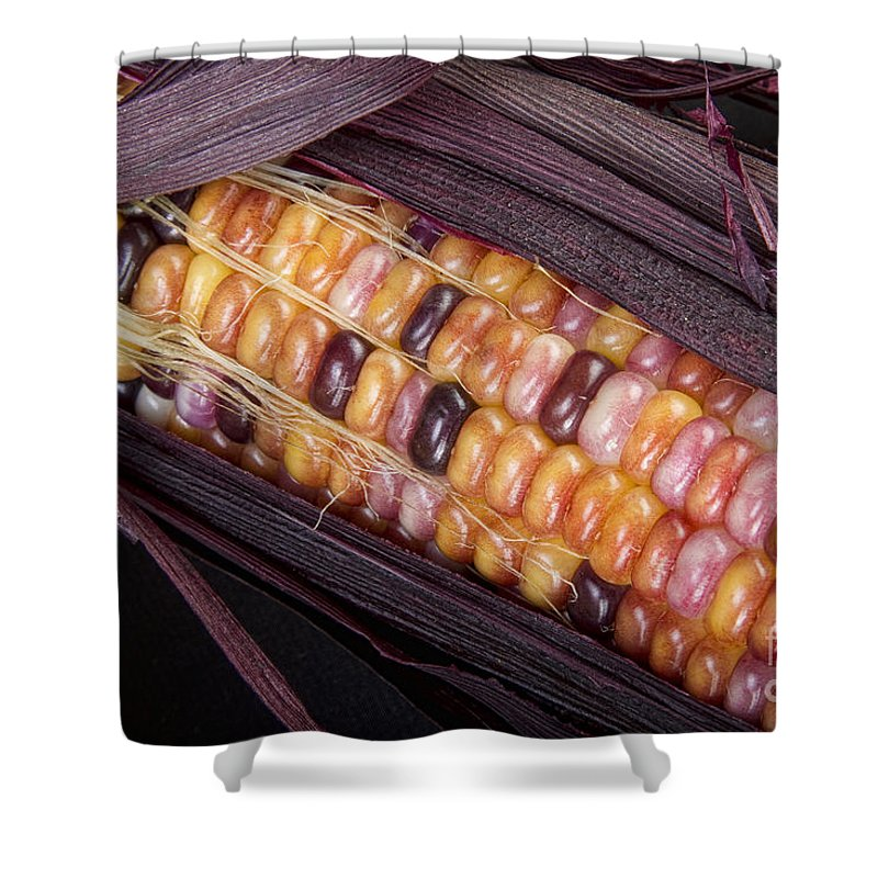 Corn Shower Curtain featuring the photograph Colorful Indian Corn by James BO Insogna