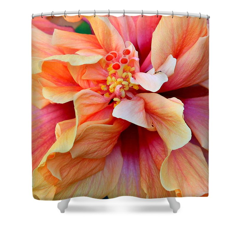 Colors Shower Curtain featuring the photograph Coloring Book Hibiscus by Karon Melillo DeVega