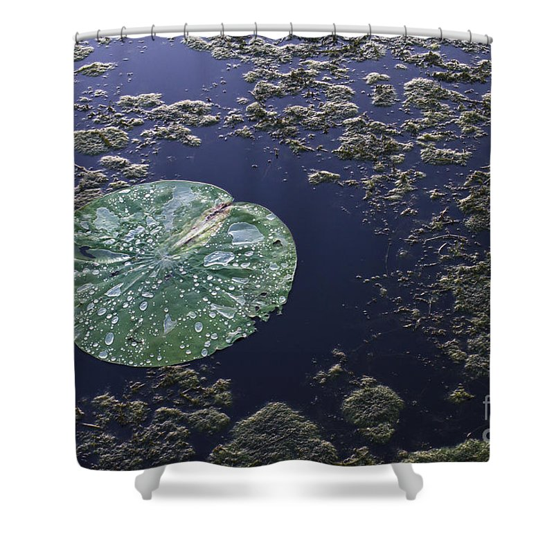 Alligator Shower Curtain featuring the photograph Colors Of Our Planet by Ellie Teramoto