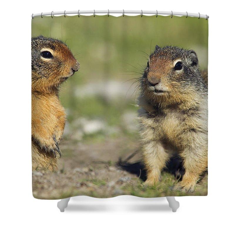 Light Shower Curtain featuring the photograph Columbian Ground Squirrels, Banff by Darwin Wiggett