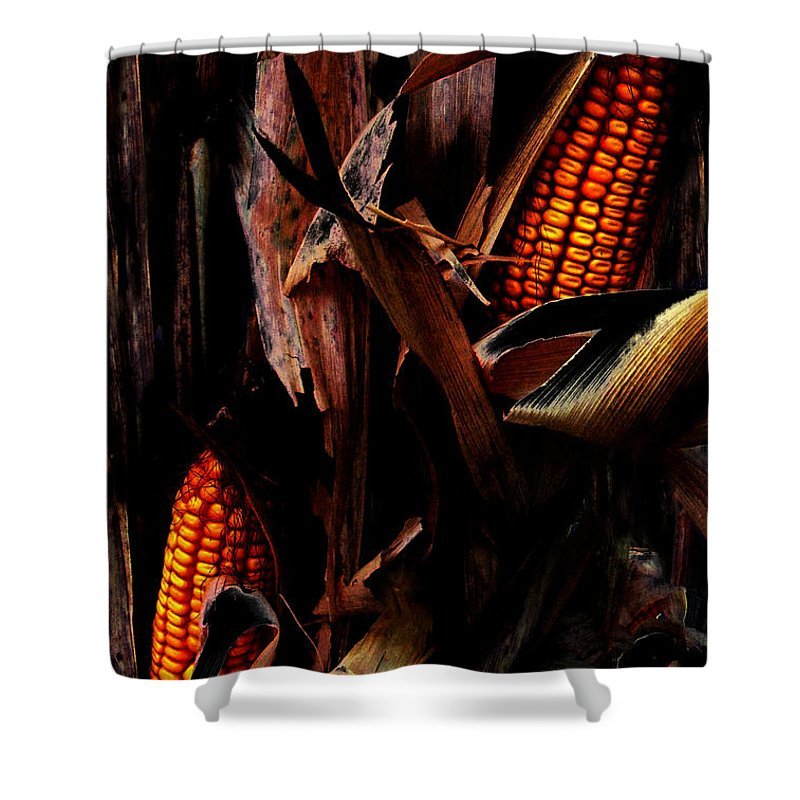 Corn Stalks Shower Curtain featuring the photograph Corn Stalks by Rachel Christine Nowicki