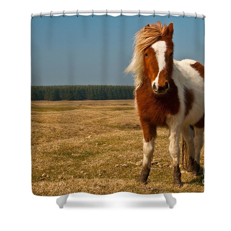 Pony Shower Curtain featuring the photograph Cornish Pony by Rob Hawkins