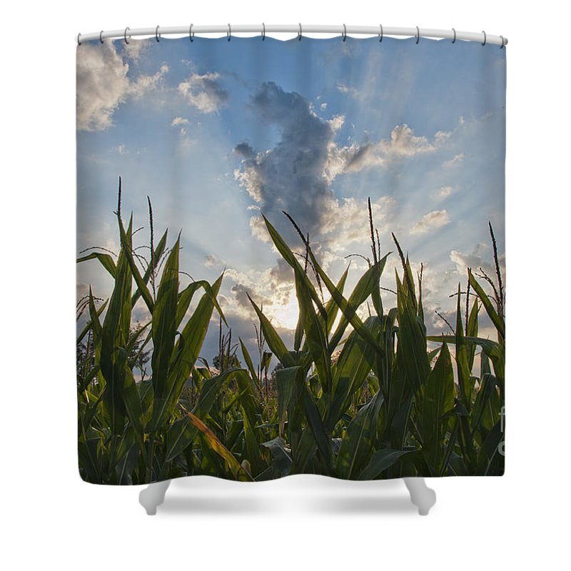 Corn Shower Curtain featuring the photograph Cornlight by David Arment