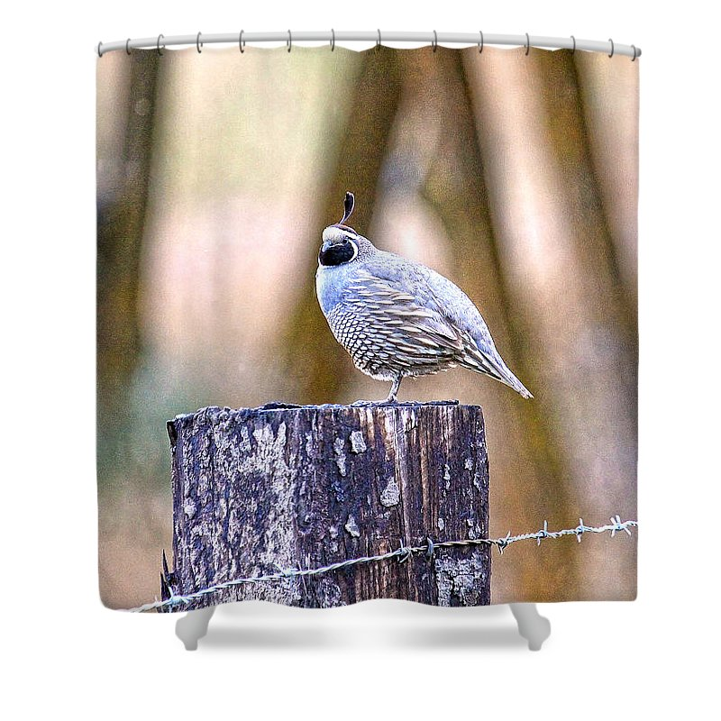 Quail Shower Curtain featuring the photograph Country Quail by Steve McKinzie