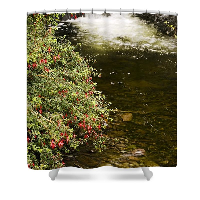 Blossom Shower Curtain featuring the photograph County Kerry, Ireland Fuchsia Bush by Peter McCabe