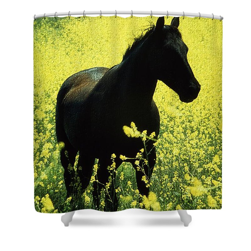 Ireland Shower Curtain featuring the photograph County Tipperary, Ireland Horse In A by Richard Cummins