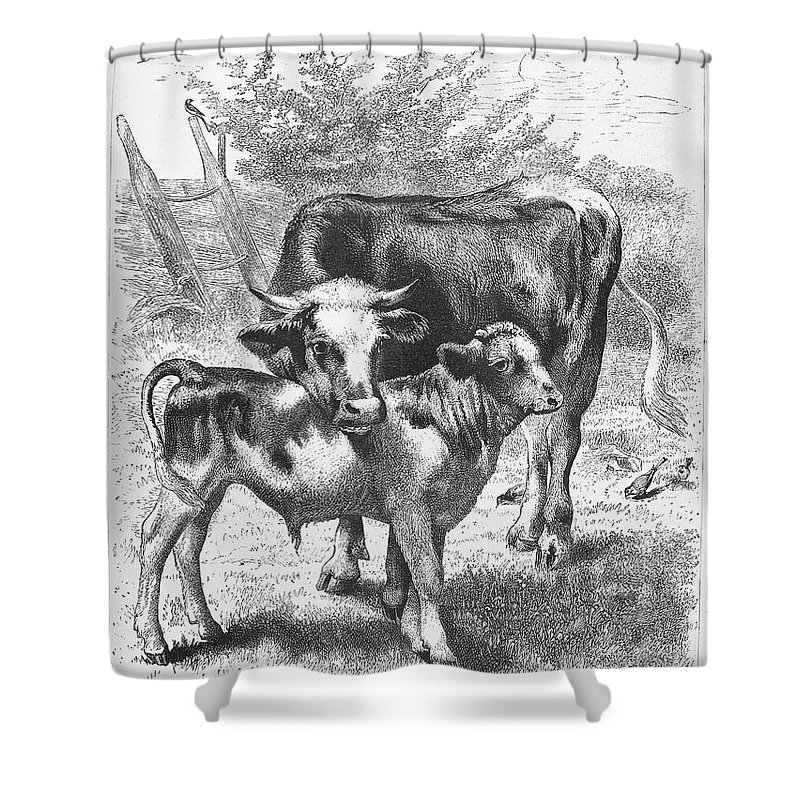 Baby Shower Curtain featuring the photograph Cow And Calf by Granger