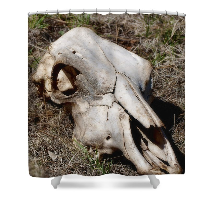 Skull Shower Curtain featuring the photograph Cow Skull by Donna Greene