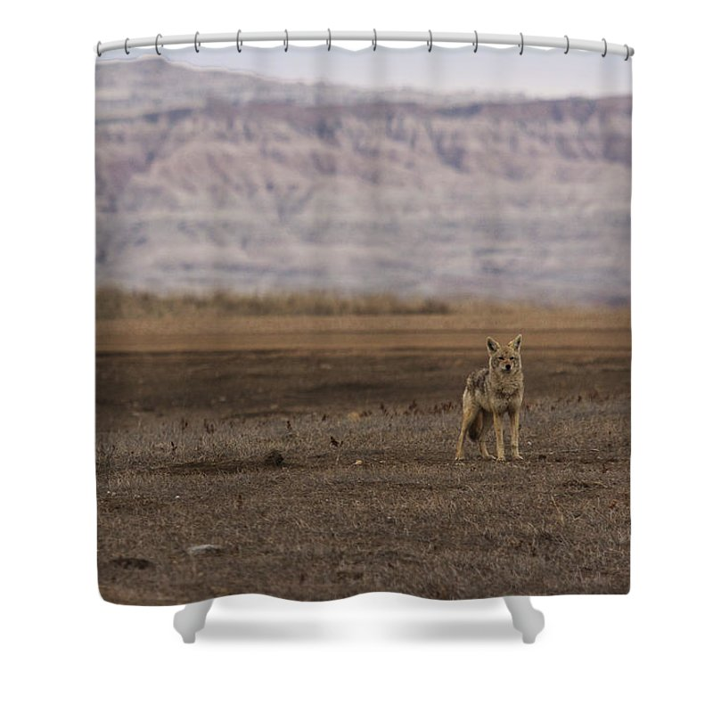Coyote Shower Curtain featuring the photograph Coyote Badlands National Park by Benjamin Dahl