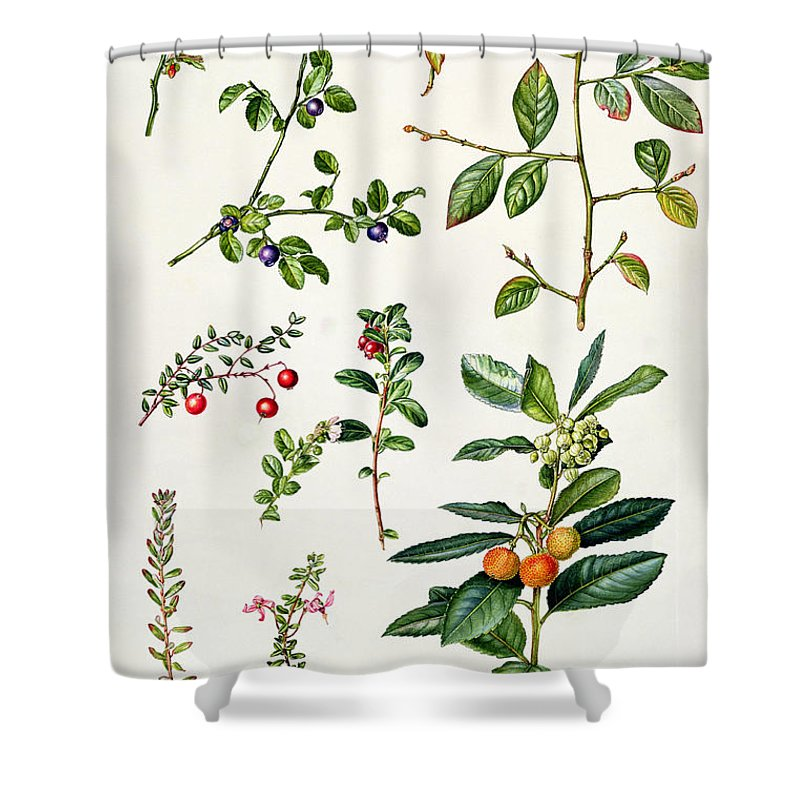 Cranberry And Other Berries Shower Curtain For Sale By Elizabeth Rice