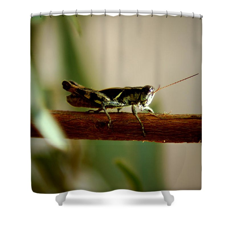 Grasshopper Shower Curtain featuring the photograph Crossing The Ravine by David Weeks