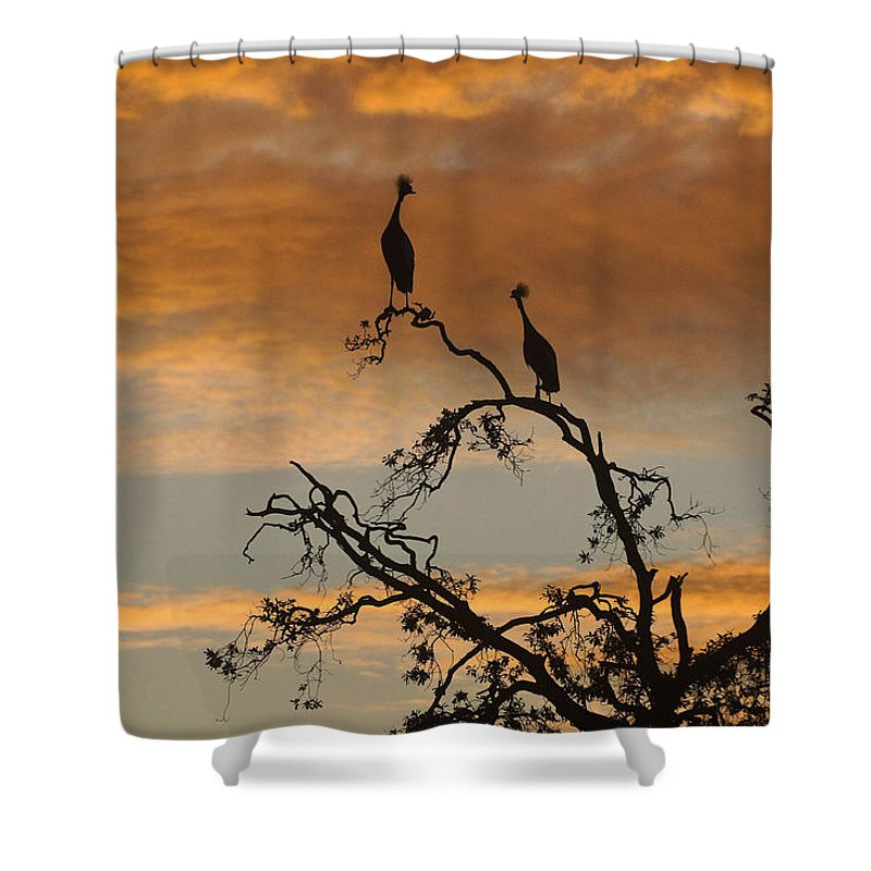 Africa Shower Curtain featuring the photograph Crowned Cranes At Sunrise by Michele Burgess