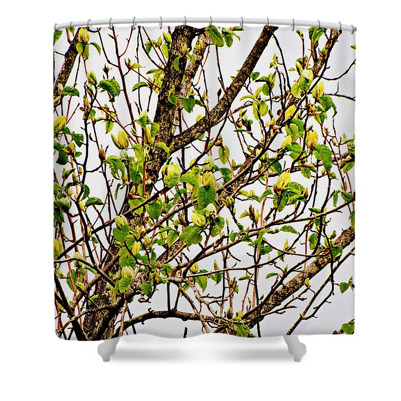 Trees Shower Curtain featuring the photograph Cucumber Tree Blossoms by Mel Hensley
