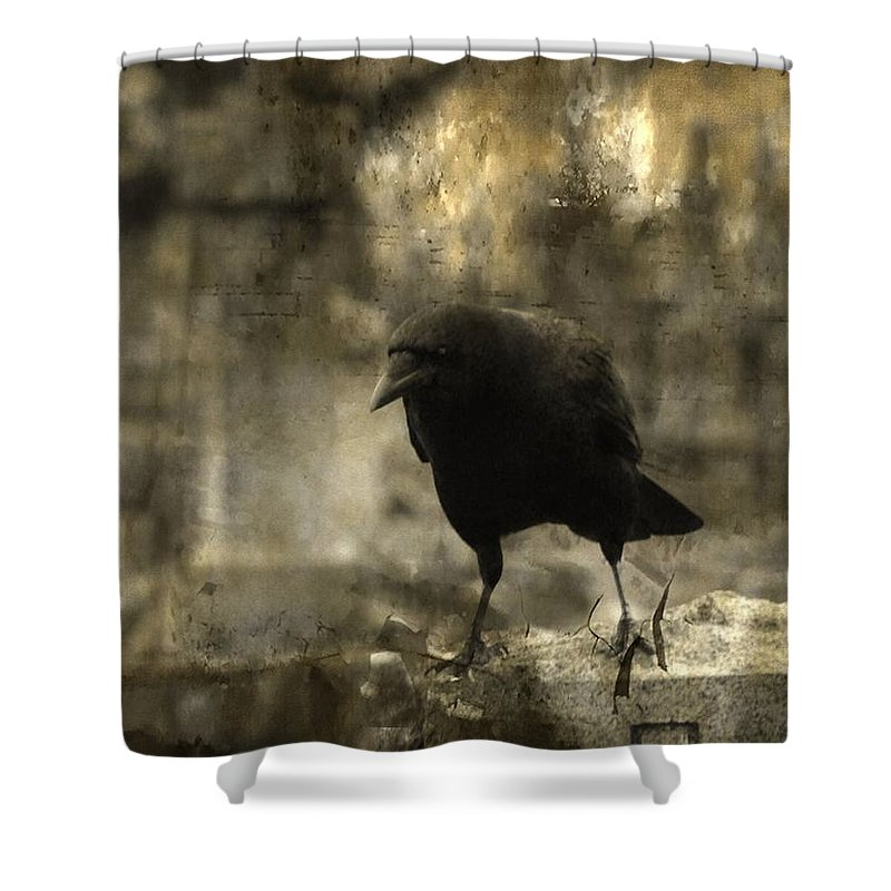Crow Photograph Shower Curtain featuring the photograph Curiosity Of The Graveyard Crow by Gothicrow Images