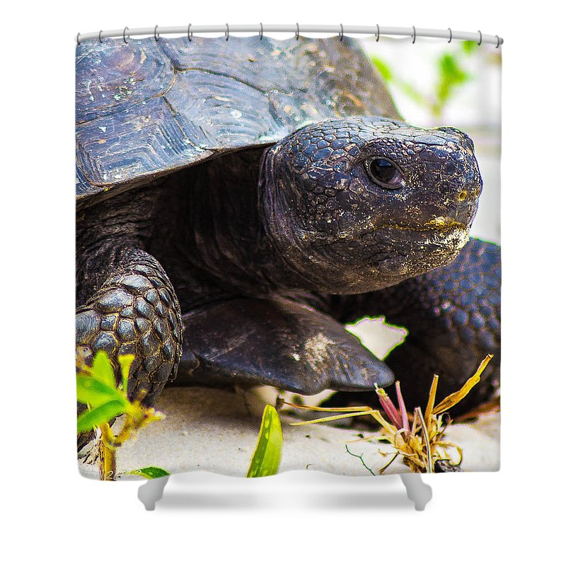 Shower Curtain featuring the photograph Curious Turtle by Shannon Harrington