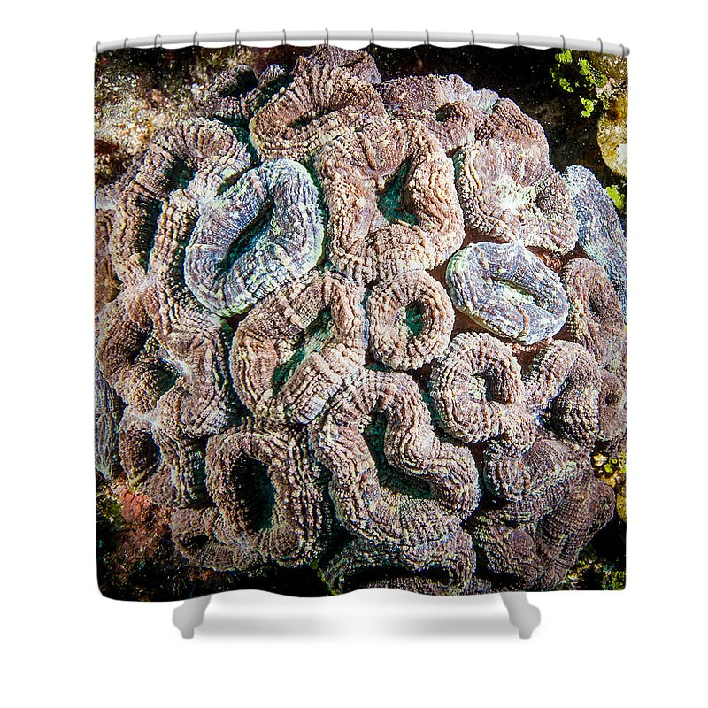 Belize Shower Curtain featuring the photograph Curler Coral by Jean Noren