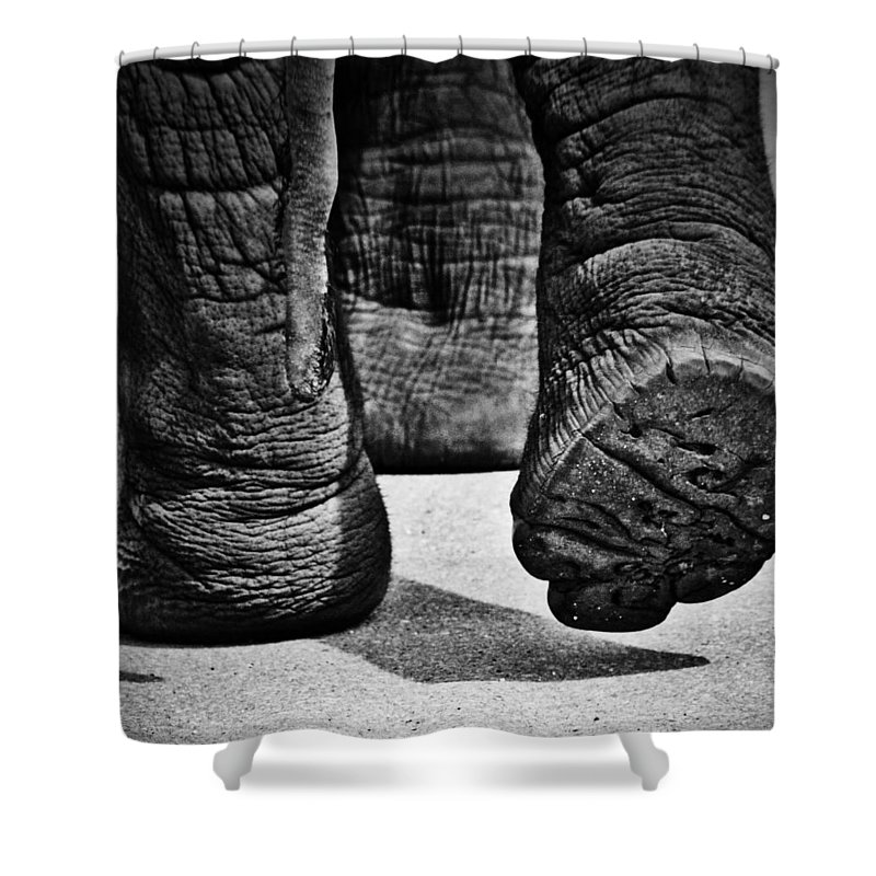 Street Photographer Shower Curtain featuring the photograph Cushioned Wallow by The Artist Project