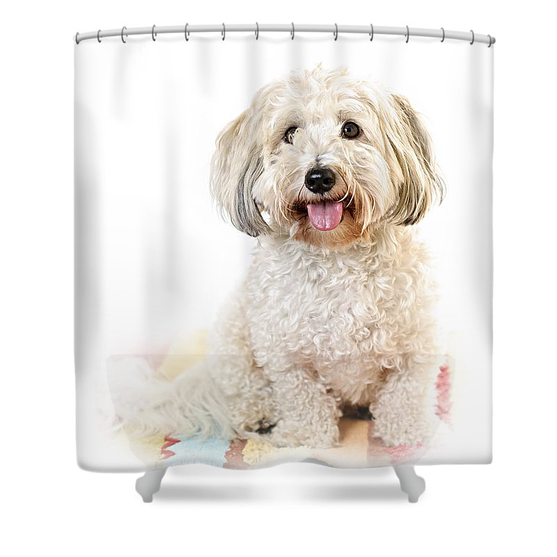 Dog Shower Curtain featuring the photograph Cute Dog Portrait by Elena Elisseeva