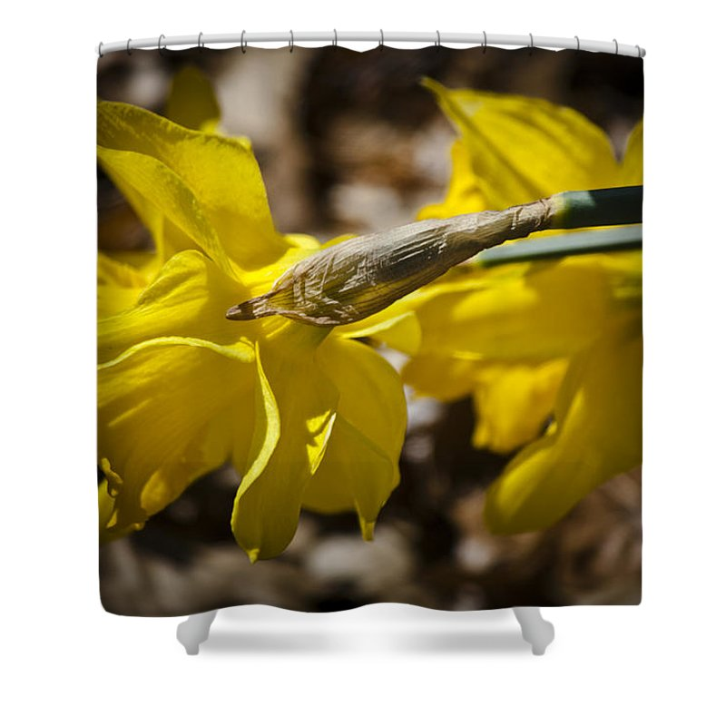 Daffodil Shower Curtain featuring the photograph Daffodil Sunshine by Teresa Mucha