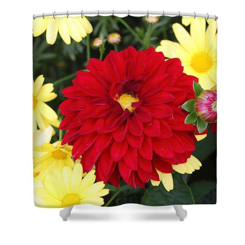 Doug Lloyd Shower Curtain featuring the photograph Dahlias And Daisys by Doug Lloyd