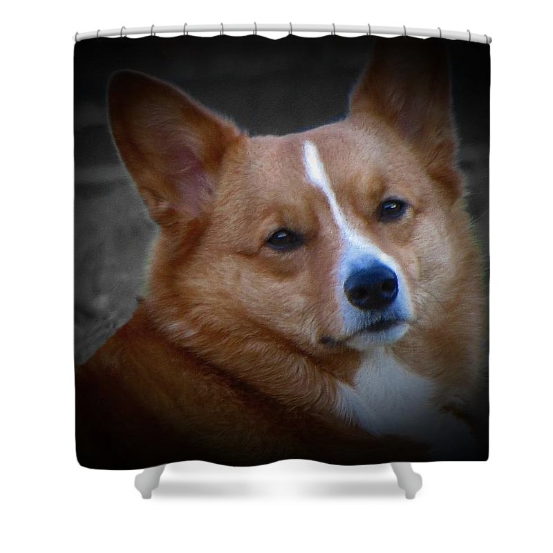 Corgi Shower Curtain featuring the photograph Daisie Our Corgi by David Dehner