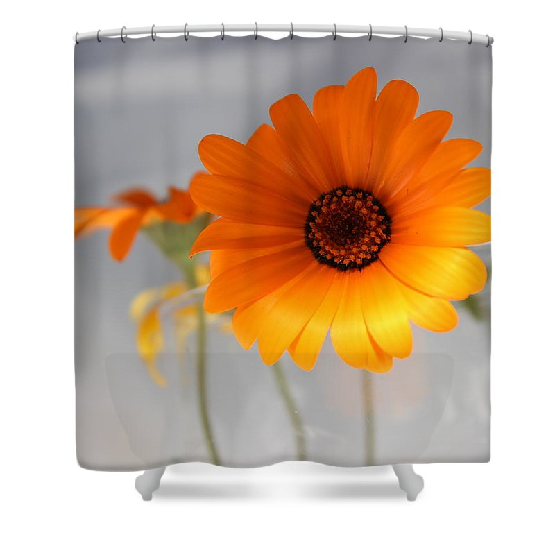 Floral Shower Curtain featuring the photograph Daisies 4 by Kume Bryant