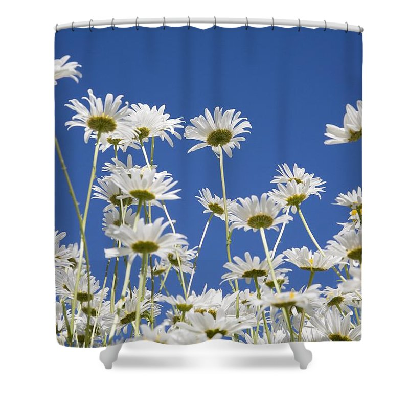 American Shower Curtain featuring the photograph Daisies by Craig Tuttle