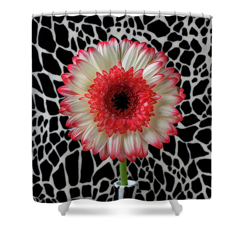 Daisy Mum Flower Vase Red Shower Curtain featuring the photograph Daisy And Graphic Vase by Garry Gay