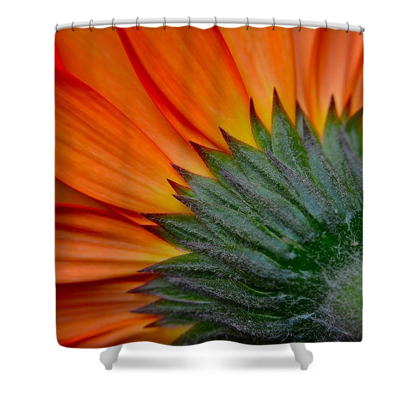 Daisy Shower Curtain featuring the photograph Daisy Delight by Frozen in Time Fine Art Photography