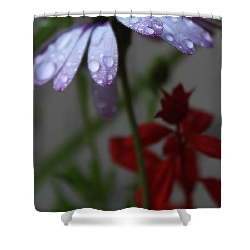 Daisy Shower Curtain featuring the photograph Daisy Drops by Lauri Novak