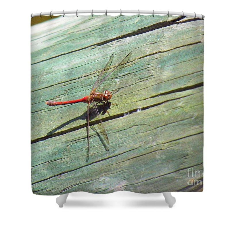 Damselfly Shower Curtain featuring the photograph Damselfly ready for liftoff by Rrrose Pix