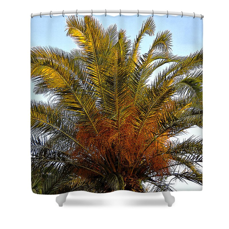 Date Palm Tree Shower Curtain featuring the painting Date Palm by David Lee Thompson