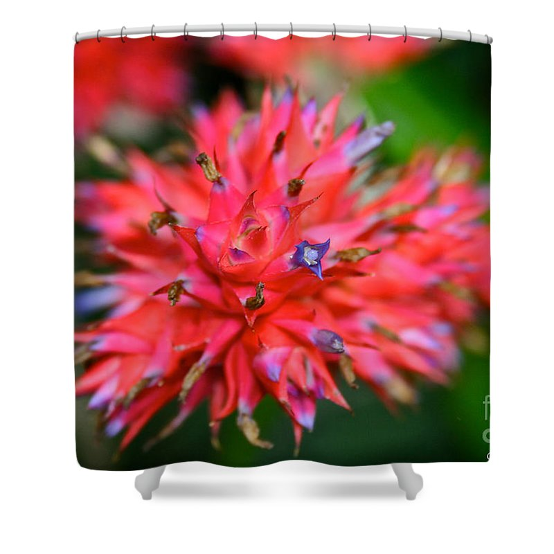 Tropical Plant Shower Curtain featuring the photograph Day Glow Glory by Susan Herber