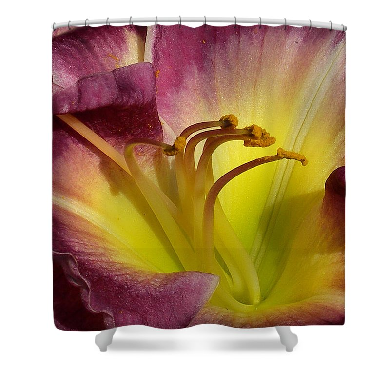 Day Lily Shower Curtain featuring the photograph Day Lily by Skip Willits