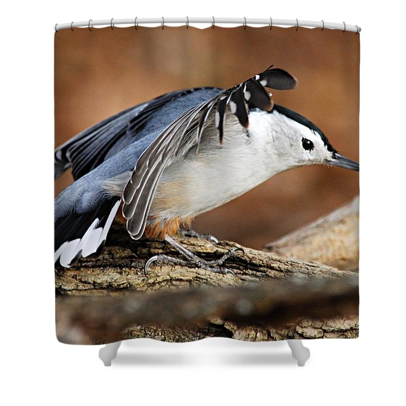 Photography Shower Curtain featuring the photograph Defiant Nuthatch by Larry Ricker